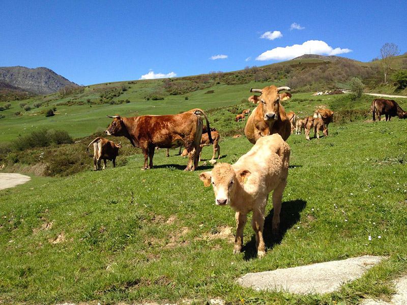 Experiencias rurales para desconectar en Cantabria