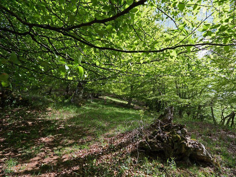 Turismo sostenible en Cantabria. Las mejores experiencias rurales. Turismo rural de experiencias