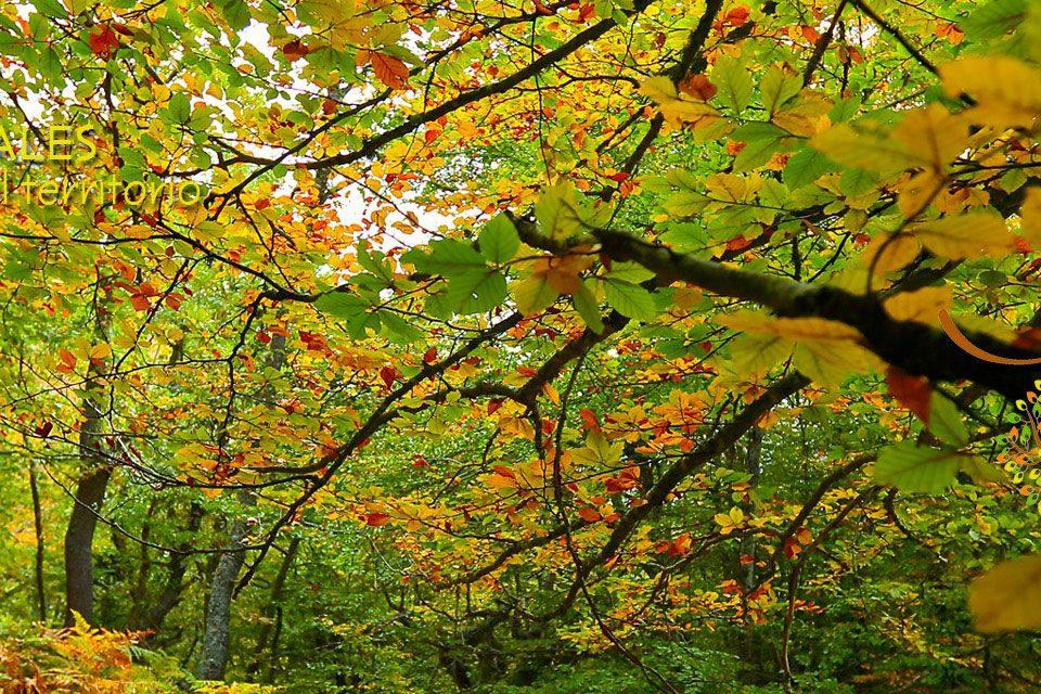Excursiones para el otoño en el bosque; Nansa Natural; Escapadas rurales; Naturaleza de Cantabria; Viajes en familia; Jornadas Europeas de Patrimonio; Nansa Natural; Turismo de experiencias; Rutas con Nansa Natural; Experiencias rurales en el valle del Nansa; Turismo en Cantabria; Saja-Nansa; Viajar; Turismo de interior; Patrimonio natural; Patrimonio cultural; La mejor forma de hacer turismo; Paseos por el campo; Pueblos con encanto; Paisaje y rutas; Rutas por la montaña; Bosque autóctono; Turismo rural en Cantabria